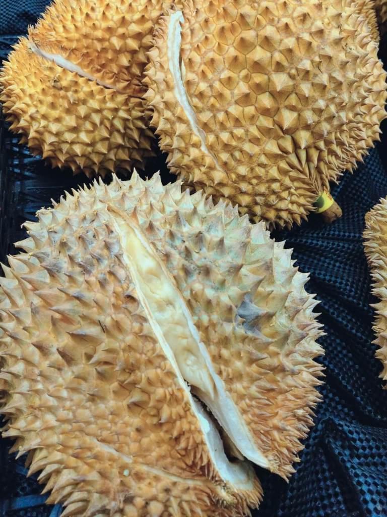 Śmierdzący owoc Duriana.