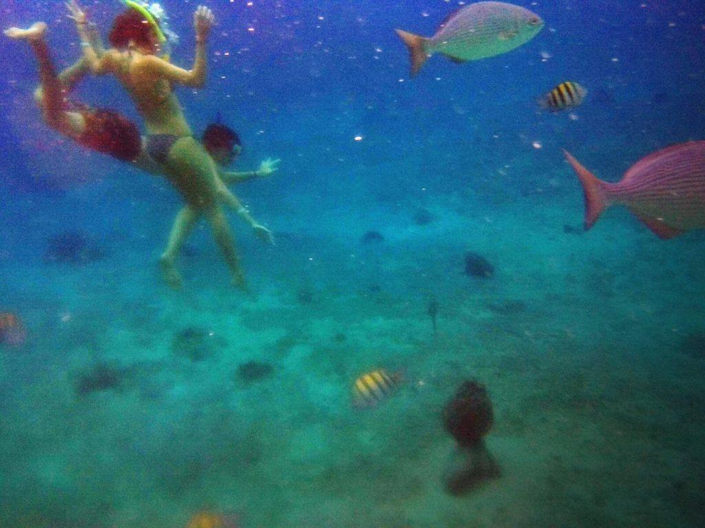 Nurkownie na rafach koralowych na wyspie Cozumel w Meksyku.