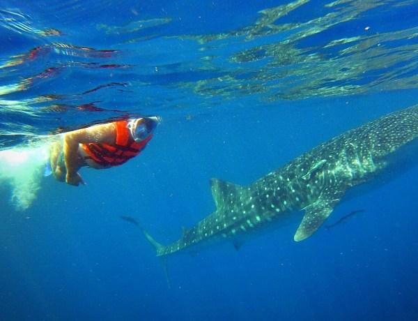 Bloger podróżniczy pływa z rekinami.