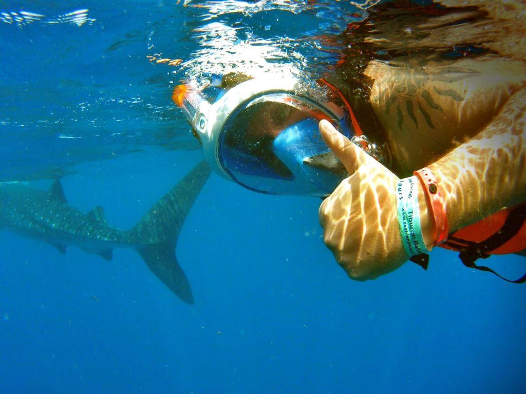 Pływanie z rekinami wielorybimi, największymi rybami na świecie.