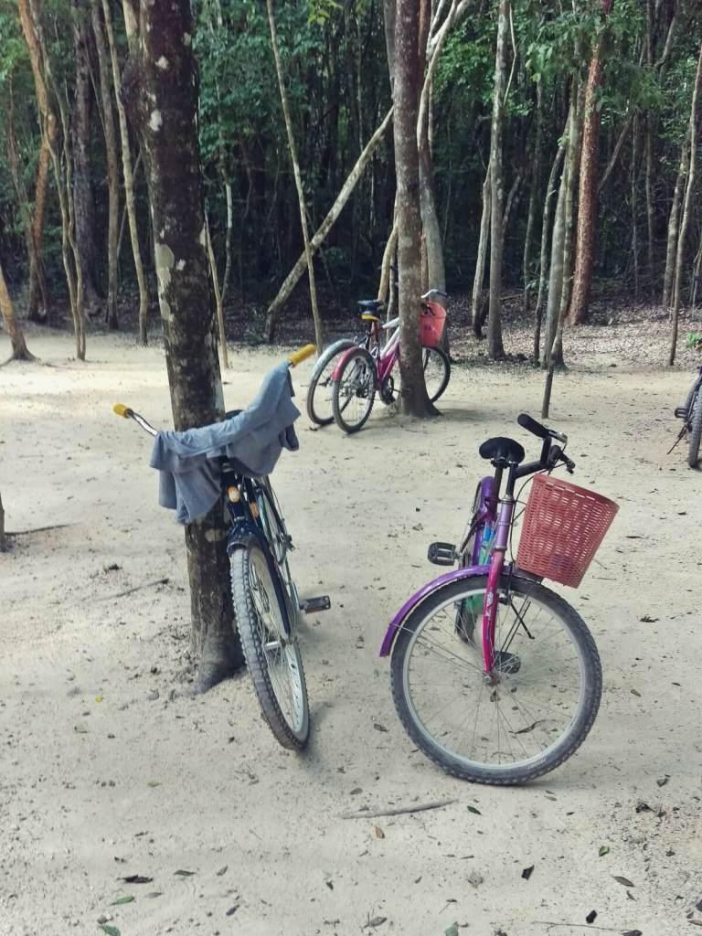 Po meksykańskiej dżungli jeździ się na rowerach.