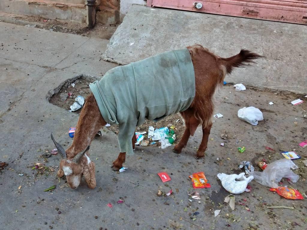 Bród na ulicach indyjskich miast.