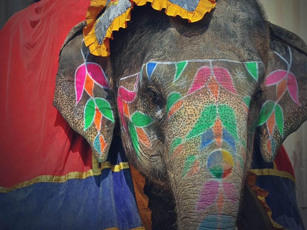 Kolorowe słonie indyjskie.