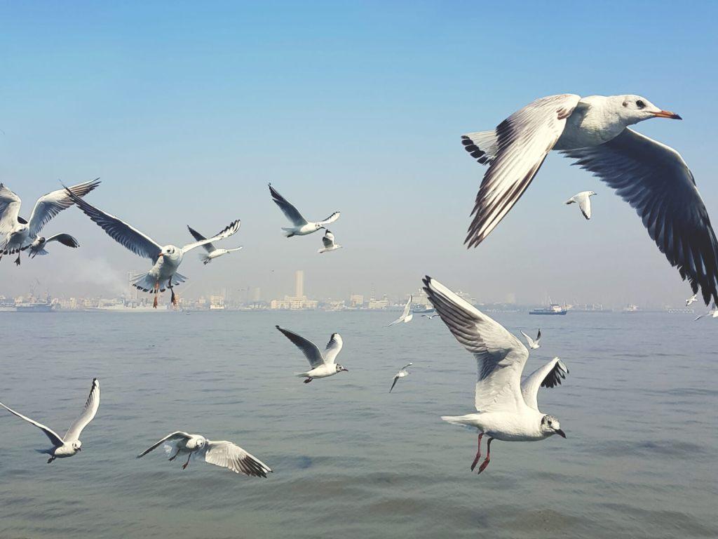 Mewy lecące za statkiem.