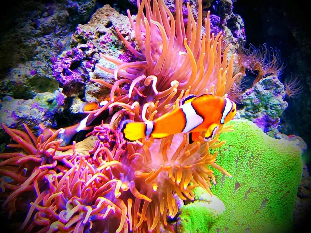 W lizbońskim akwarium można oglądać kolorowe ryby.