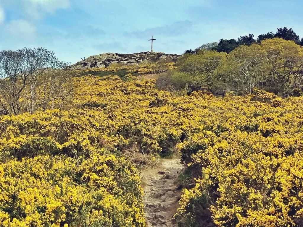 Krzyż na szczycie góry wśród kwitnących żółtych kwiatów.