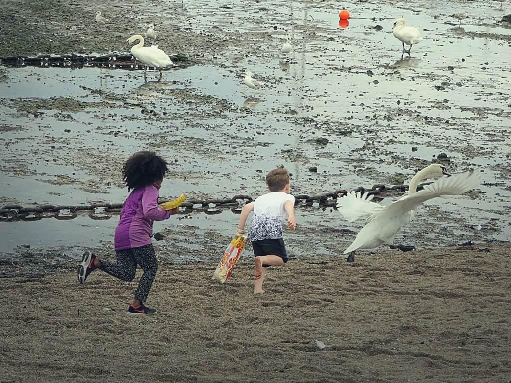 Dzieci gonią i karmią łabędzie.