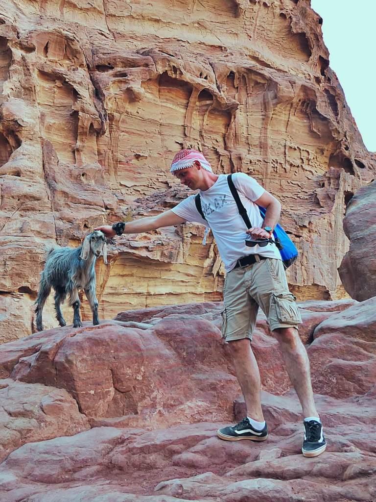 Bloger podróżniczy wita się z kozami w Petrze.