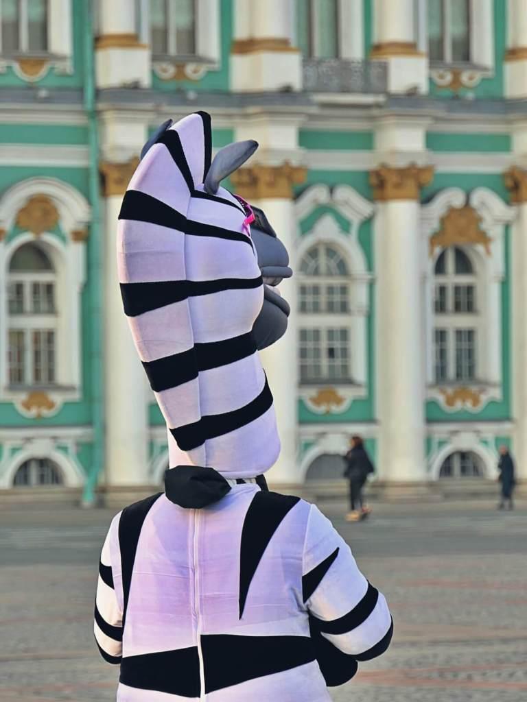 Zebra przed Ermitażem w Petersburgu.