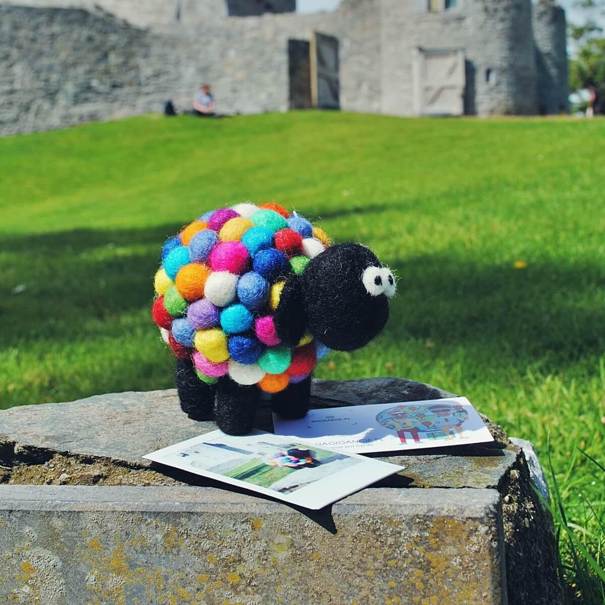 Wełniana owca kupiona w Killarney w Irlandii.