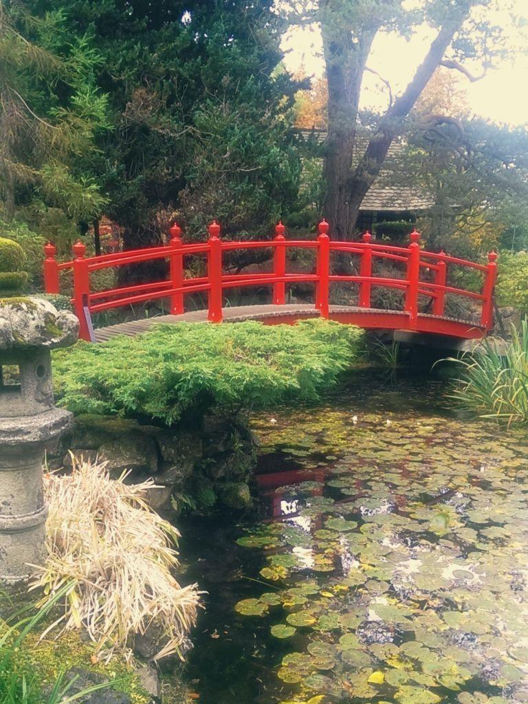 Ogród japoński w Kildare w Irlandii.